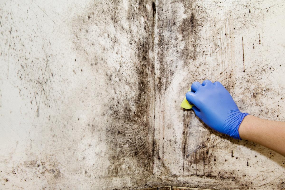 La moisissure, un fléau à combattre dans votre maison